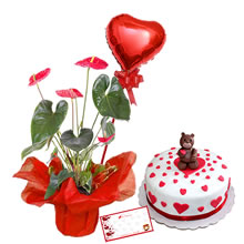 Anturio for gift, delivery of anthurium, chocolate cake for gift, cakes for Mother's Day, cakes for lovers, flower arrangements for Mother's Day, gifts for lovers, delivery of cakes, gifts in Lima peru, gifts for them , delivery in Lima